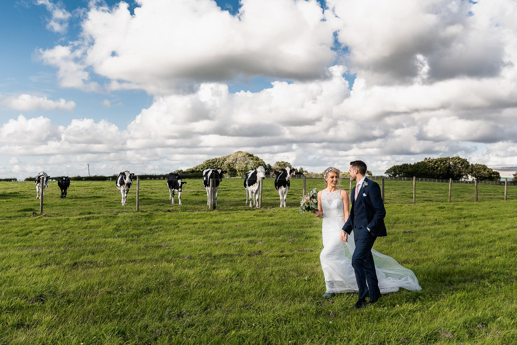 Bride and groom walking through field with cows looking on