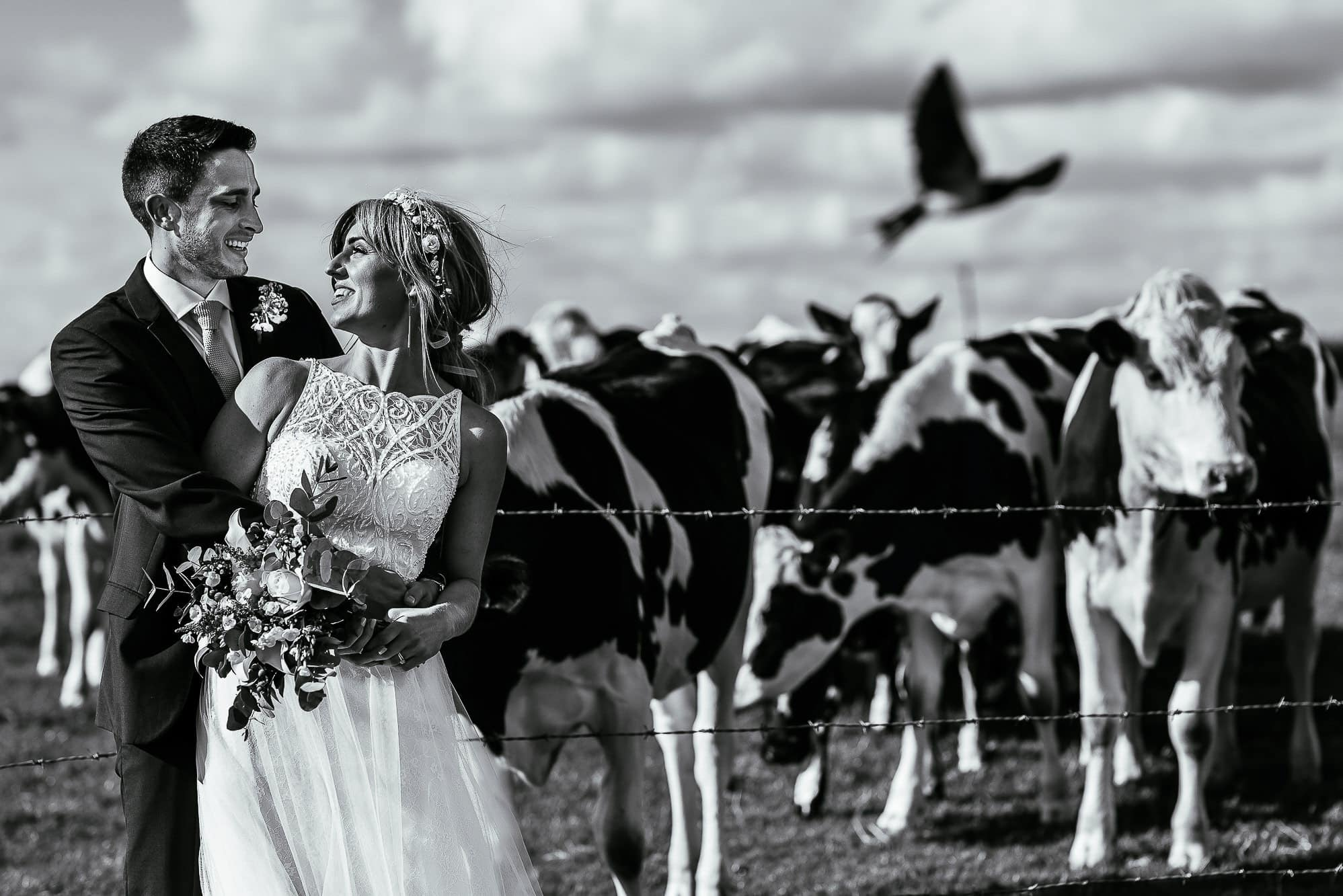 Bride and groom hugging with cows behind