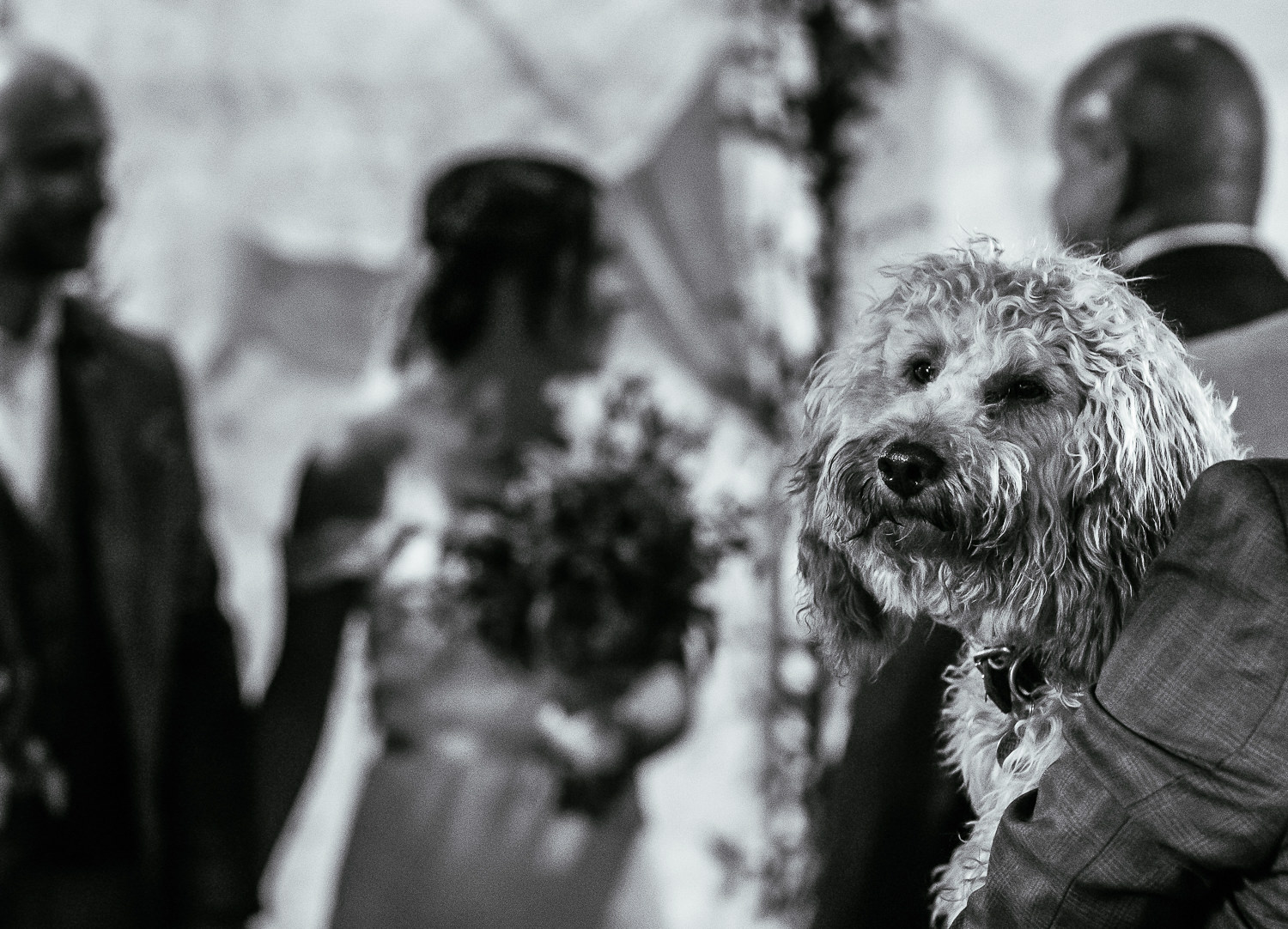 Dog with bride and groom in background