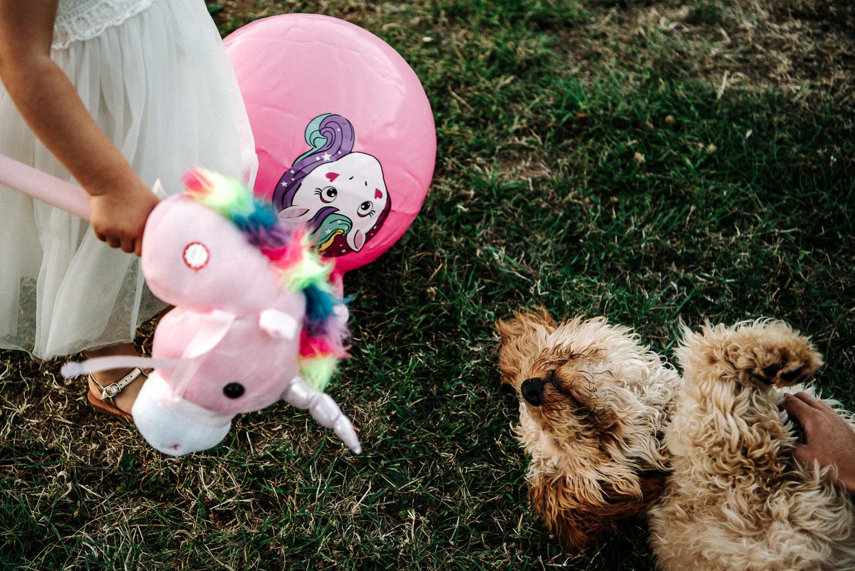 Dog and unicorn
