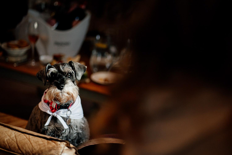 Brides dog at Falcon Manor
